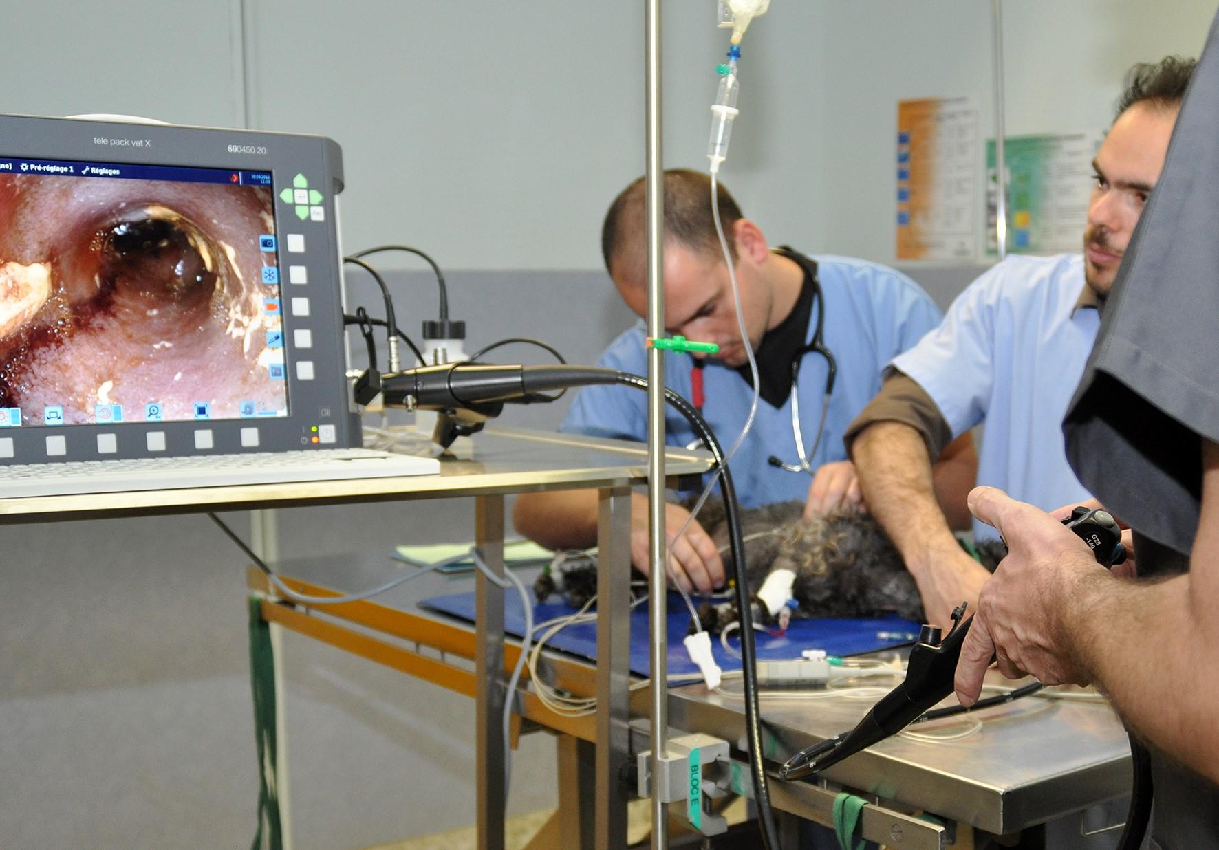 Inauguration endoscope Chaire sante & alimentation Oniris