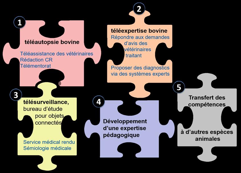 axes de la chaire telemedecine
